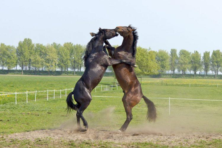PS haben tatsächlich etwas mit Pferden zu tun