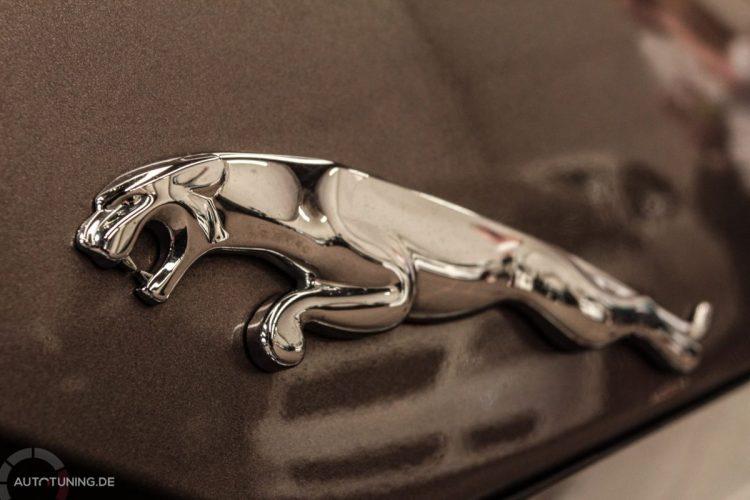 jaguarxf (3)