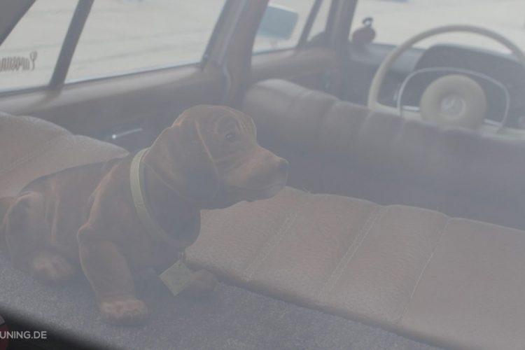 Standesgemäßer Wackeldackel auf der Hutablage des Mercedes-Benz W 115